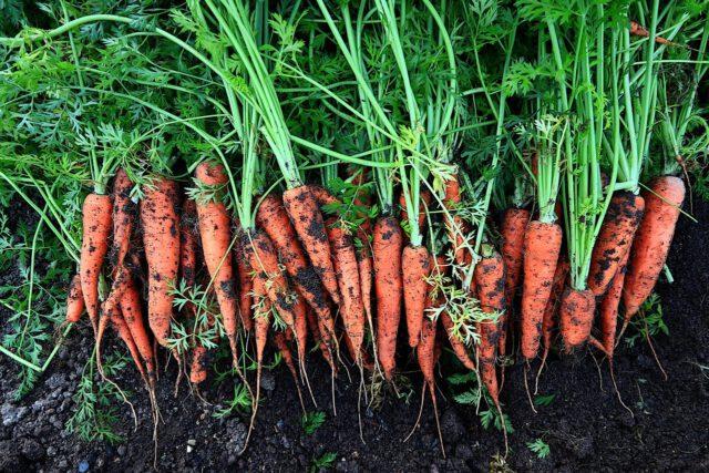 Jak założyć ogródek warzywny?